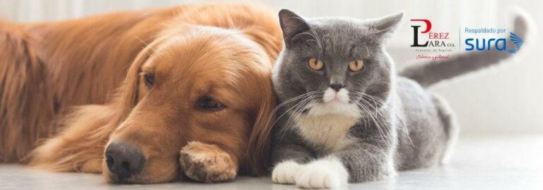 Seguro para mascotas SUR